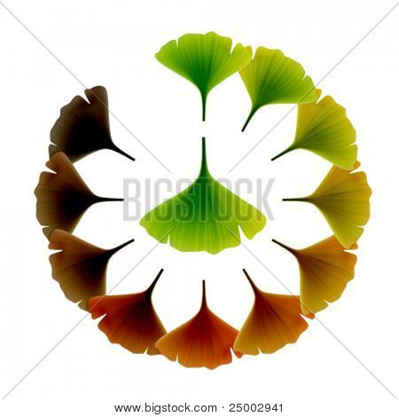 Green Vector ginko Leaves