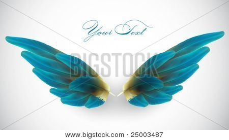 vector bird wing illustration
