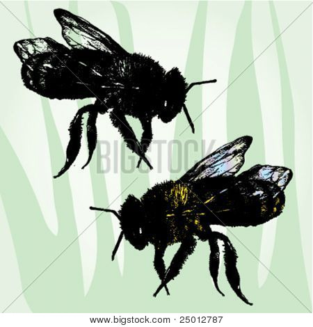 Two Hand Drawn Bees Black Outline and Colorful