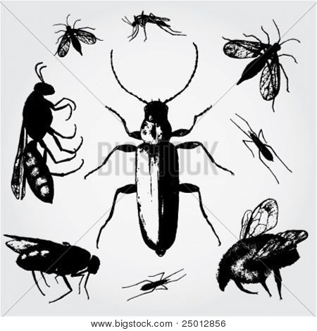 Hand Drawn Insect