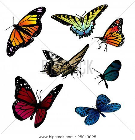 set of different butterflies vector