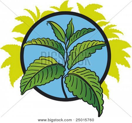 Green leaves of peppermint on a blue background.