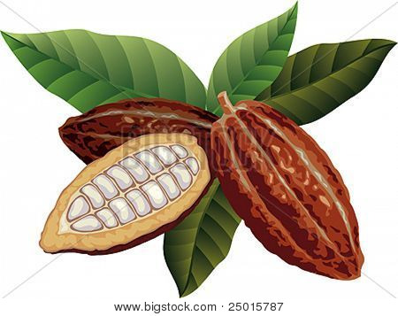 Cocoa beans with green leaves.