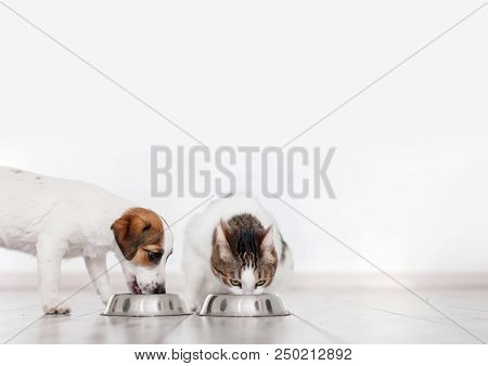 poster of Dog and cat eating food. Puppy eating dogs food. Pets at home