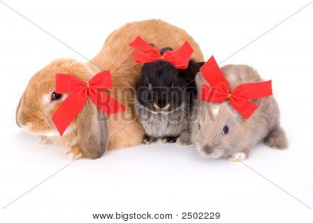 Three Bunny Wearing A Red Bow And Lying