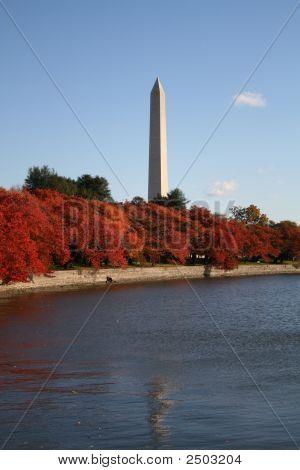 Tidal Pool In Autumn
