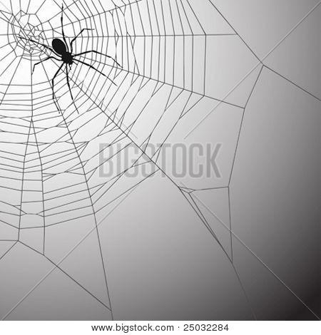 Een Spiderweb vectorillustratie met Spider