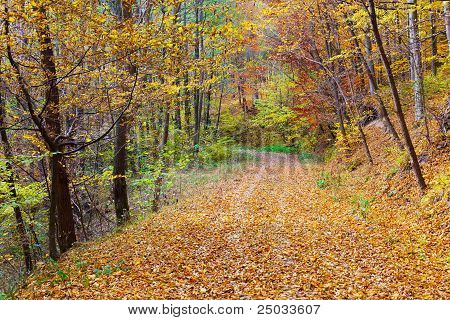 Colorful Autumnal Landscape
