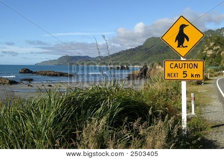 Caution, Penguins