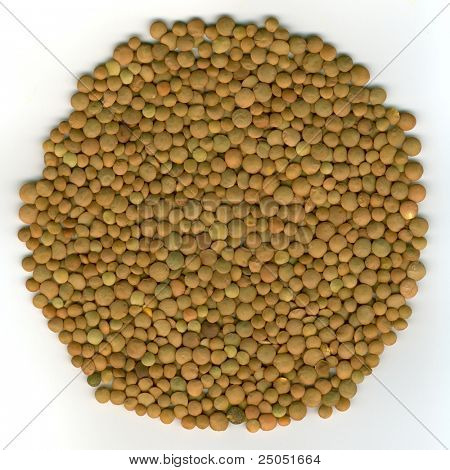 kernels lentil (high resolution closeup)