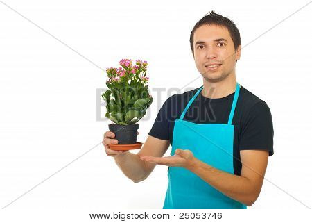 Male Florist Showing To Kalanchoe Flower