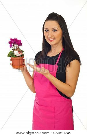 Florist Woman Offering Cyclamen For Sale