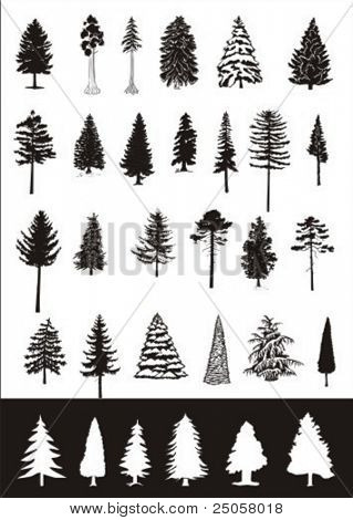 coniferous trees - vector collection