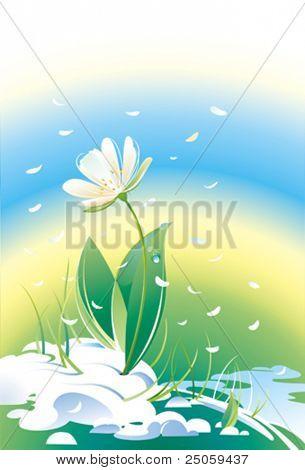 Flower snowdrop