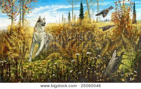 A dog chasing hazel grouses, in the autumn forest
