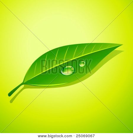 Dew drops on leaf. Vector, no mesh.