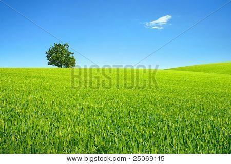 Field, tree and sky.