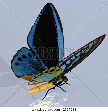 Digital Butterfly