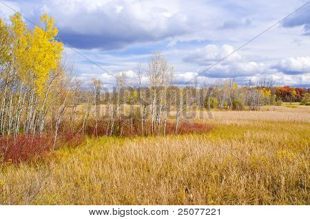Autumn Field And Forest