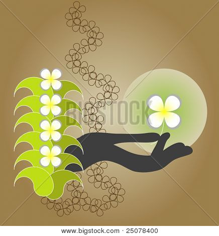 Aromatherapy Style - Silhouette of a hand holding a white fragrant Frangipani.