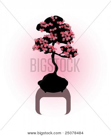 Cherry blossom bonsai tree with pink flowers.