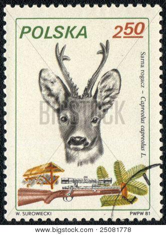 Roe Deer And Shotgun
