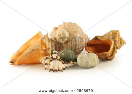 Sea Shells And Stones Isolated On White
