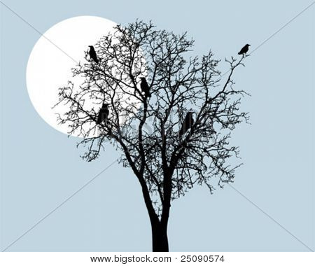 crow and tree