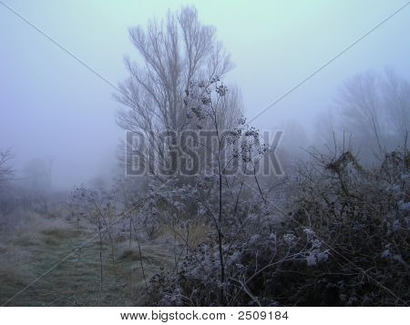 Niebla Fria