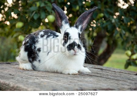 Beautiful Colorful Bunny With Big Ears In The Garden