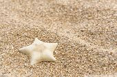 Starfish On Beach. Sea Sand Background. Starfish On The Sand poster