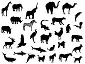 picture of animal silhouette  - Animals - JPG