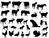 picture of farm animals  - Farm animals - JPG