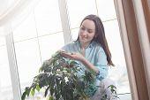 Young Brunette Rubs Green Leaves Of Indoor Plants, Care For Flora, Botany. poster