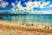 Birds On The Beach In Coco Cay Island In The Bahamas. Luxury Beach Oasis In Coco Cay. poster