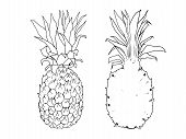Vector Line Illustration Of Pineapple. Isolated Ananas For Label, Menu, Icon. Black Line Sketched Ha poster