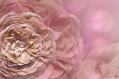 Floral  Pink Beautiful Background.  Flower Composition. Greeting Card From  Pink Roses On A   Light  poster