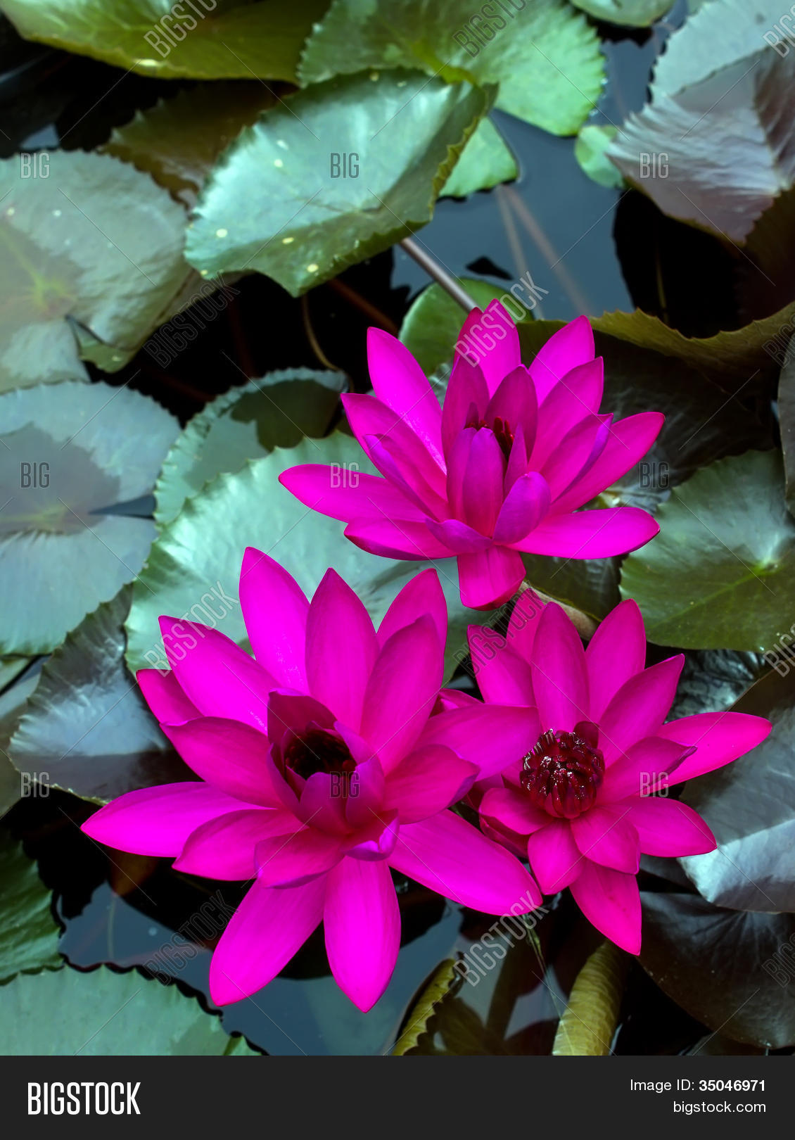 free pink leaf porn