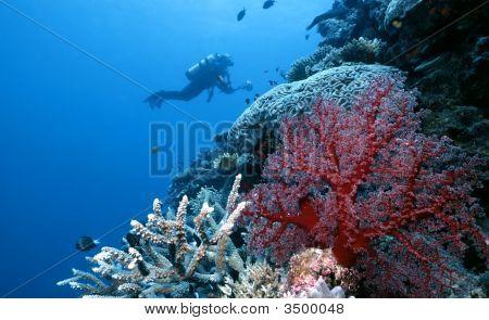 Exploring Togian Island Reef