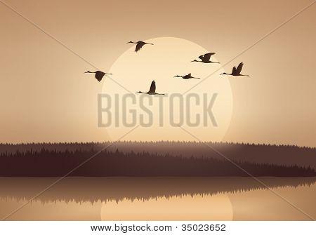 Kran bei Sonnenuntergang fliegen