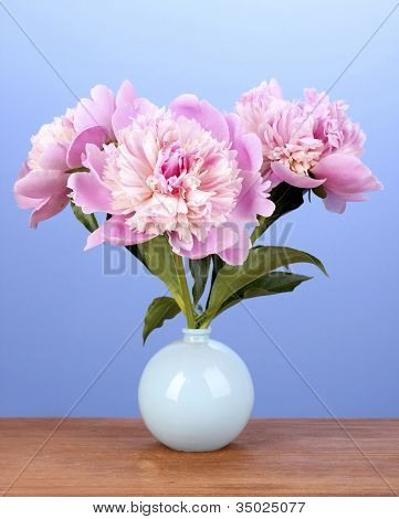 Three pink peonies in vase on wooden table on blue background