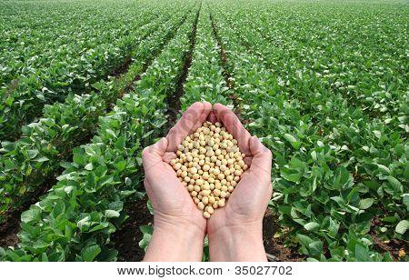 Concepto agrícola