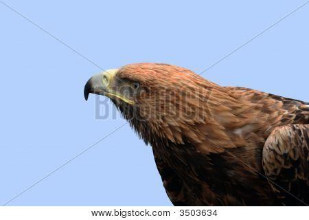 Eagle And Blue Sky