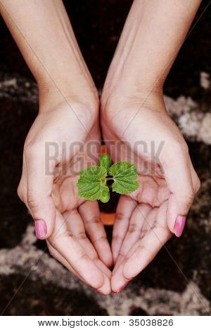 Hands Protecting Baby Plant