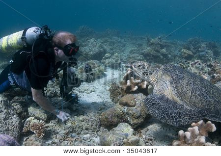 Diver Looking At Green Turtle
