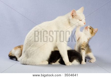 Four Kitten With Her Mom, Isolated On Blue