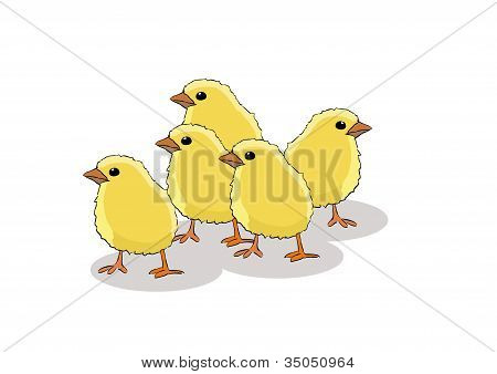 chicken on a white background