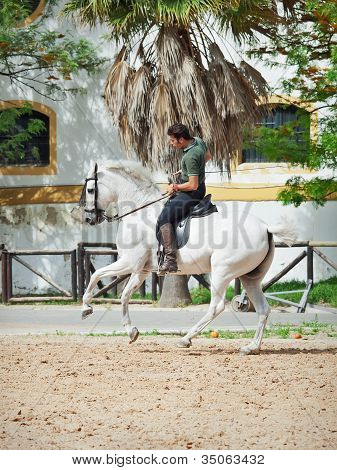 Jerez-17 May: Rider On Spanish White Horse In The Royal Andalucían School Of Equestrian Art On Demo
