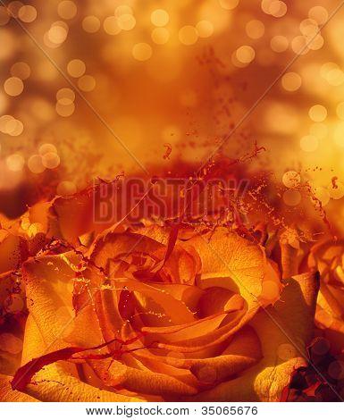 Splashing Orange Rose Card