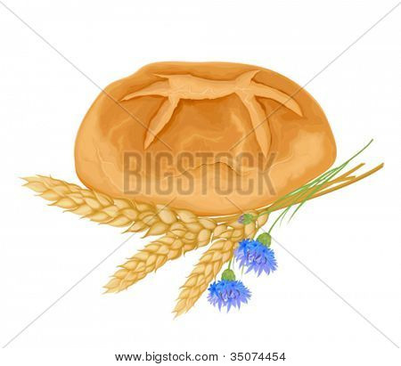 Vector whole bread and wheat stalks with cornflowers on a white background